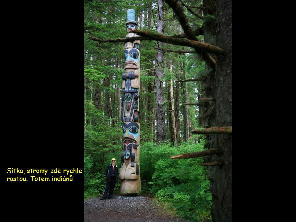 Sitka, Alaska zdejší deštný prales