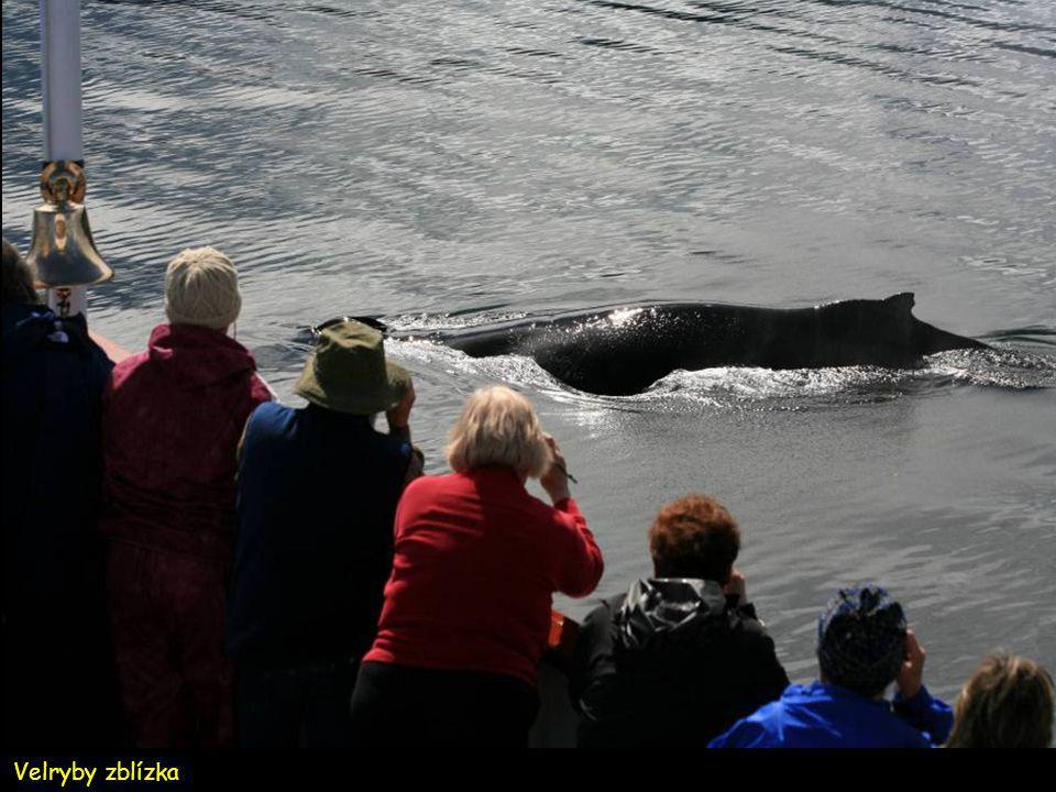Ráj velryb v Stephens Passage - Frederick Sound.