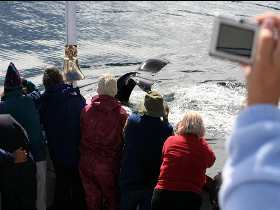 Velryby zblízka