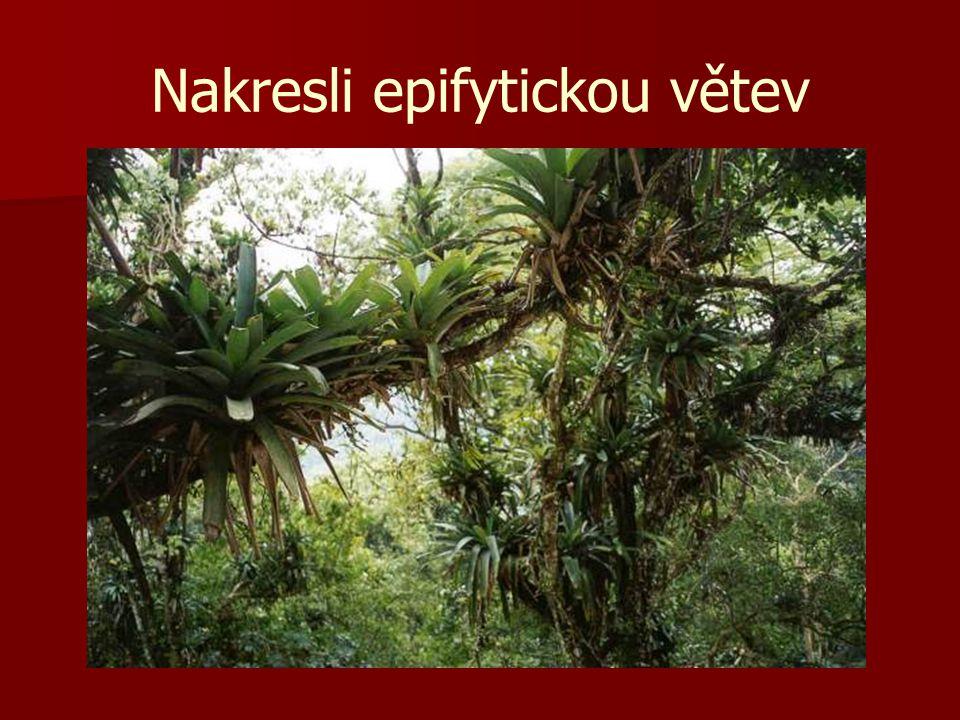 Nakresli epifytickou větev