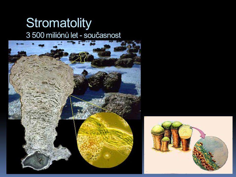 Stromatolity 3 500 miliónů let - současnost