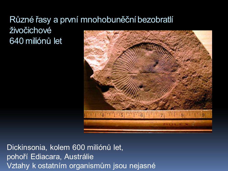 Různé řasy a první mnohobuněční bezobratlí živočichové 640 miliónů let Dickinsonia, kolem 600 miliónů let, pohoří Ediacara, Austrálie Vztahy k ostatní