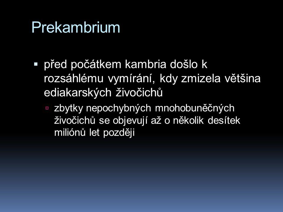 Prekambrium  před počátkem kambria došlo k rozsáhlému vymírání, kdy zmizela většina ediakarských živočichů  zbytky nepochybných mnohobuněčných živoč