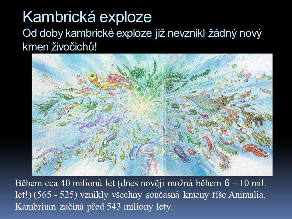Kambrická exploze Od doby kambrické exploze již nevznikl žádný nový kmen živočichů! Během cca 40 milionů let (dnes nověji možná během 6 – 10 mil. let!