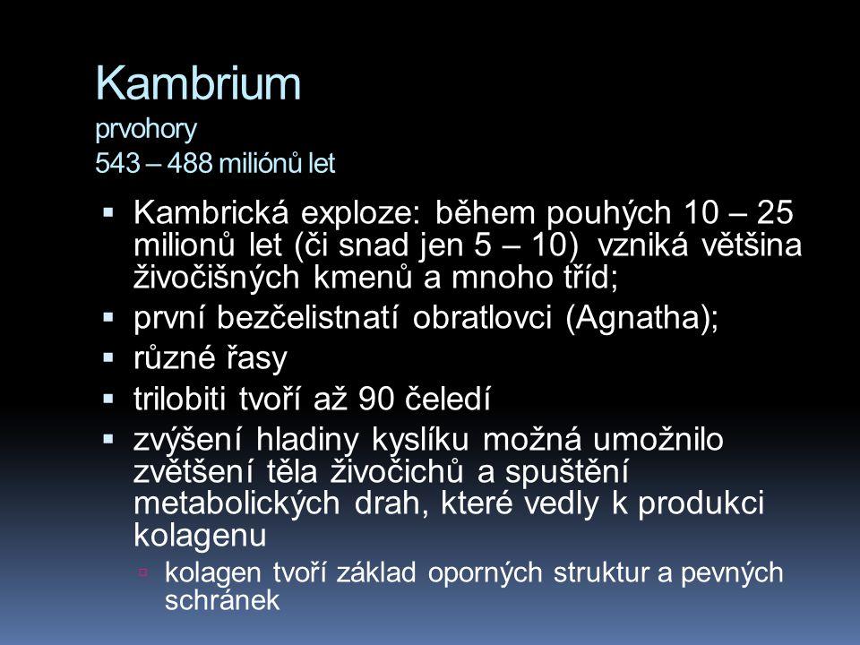 Kambrium prvohory 543 – 488 miliónů let  Kambrická exploze: během pouhých 10 – 25 milionů let (či snad jen 5 – 10) vzniká většina živočišných kmenů a