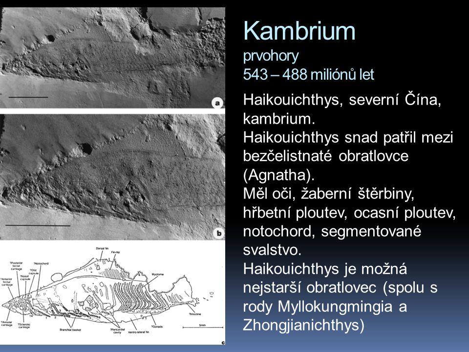 Kambrium prvohory 543 – 488 miliónů let Haikouichthys, severní Čína, kambrium. Haikouichthys snad patřil mezi bezčelistnaté obratlovce (Agnatha). Měl