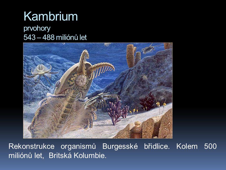 Kambrium prvohory 543 – 488 miliónů let Rekonstrukce organismů Burgesské břidlice. Kolem 500 miliónů let, Britská Kolumbie.