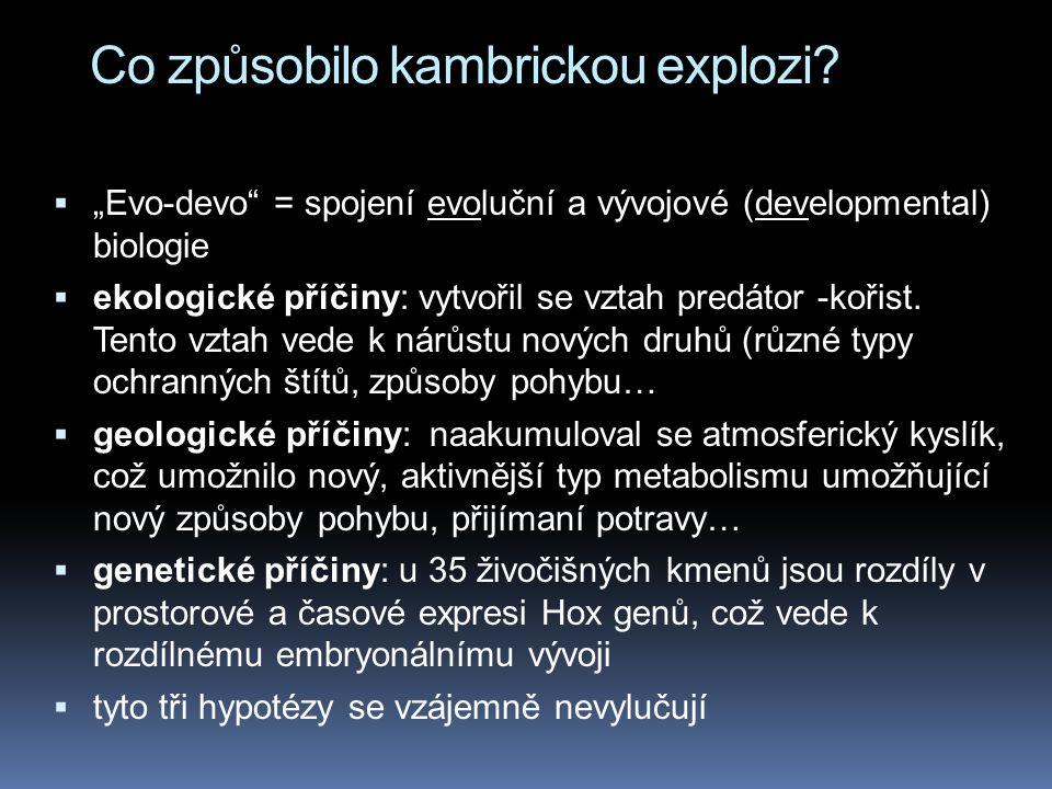 """Co způsobilo kambrickou explozi?  """"Evo-devo"""" = spojení evoluční a vývojové (developmental) biologie  ekologické příčiny: vytvořil se vztah predátor"""