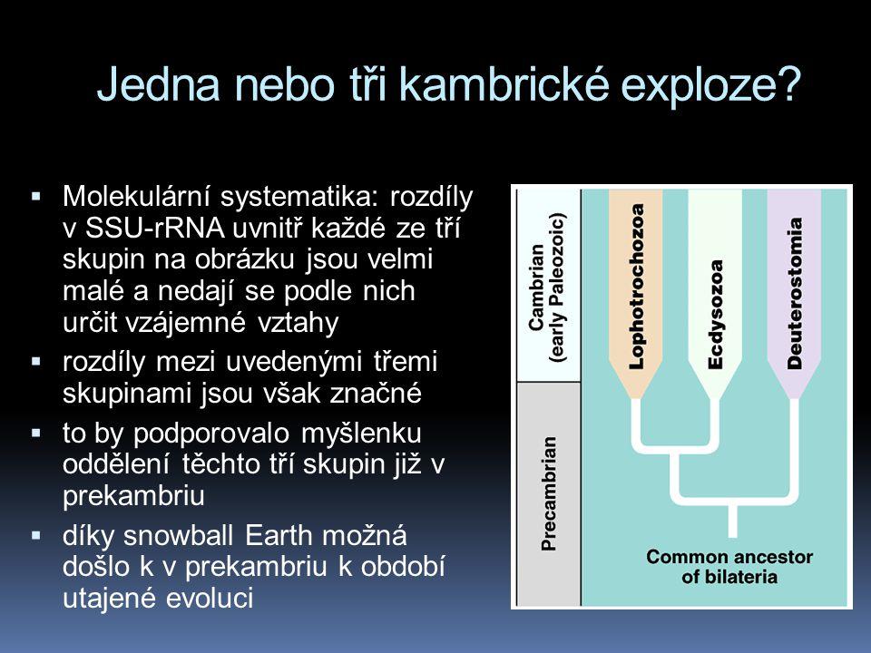 Jedna nebo tři kambrické exploze?  Molekulární systematika: rozdíly v SSU-rRNA uvnitř každé ze tří skupin na obrázku jsou velmi malé a nedají se podl