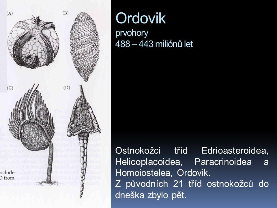 Ordovik prvohory 488 – 443 miliónů let Ostnokožci tříd Edrioasteroidea, Helicoplacoidea, Paracrinoidea a Homoiostelea, Ordovik. Z původních 21 tříd os
