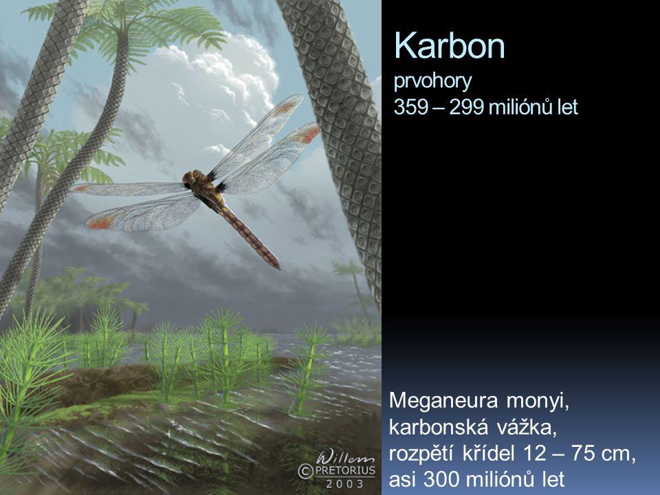 Karbon prvohory 359 – 299 miliónů let Meganeura monyi, karbonská vážka, rozpětí křídel 12 – 75 cm, asi 300 miliónů let