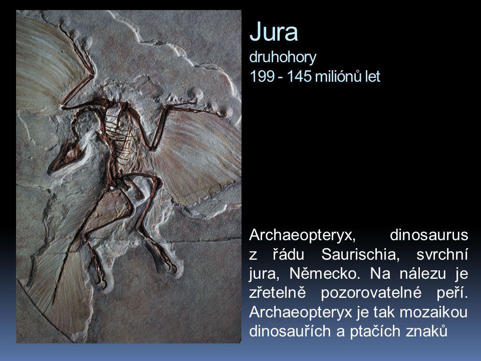 Jura druhohory 199 - 145 miliónů let Archaeopteryx, dinosaurus z řádu Saurischia, svrchní jura, Německo. Na nálezu je zřetelně pozorovatelné peří. Arc