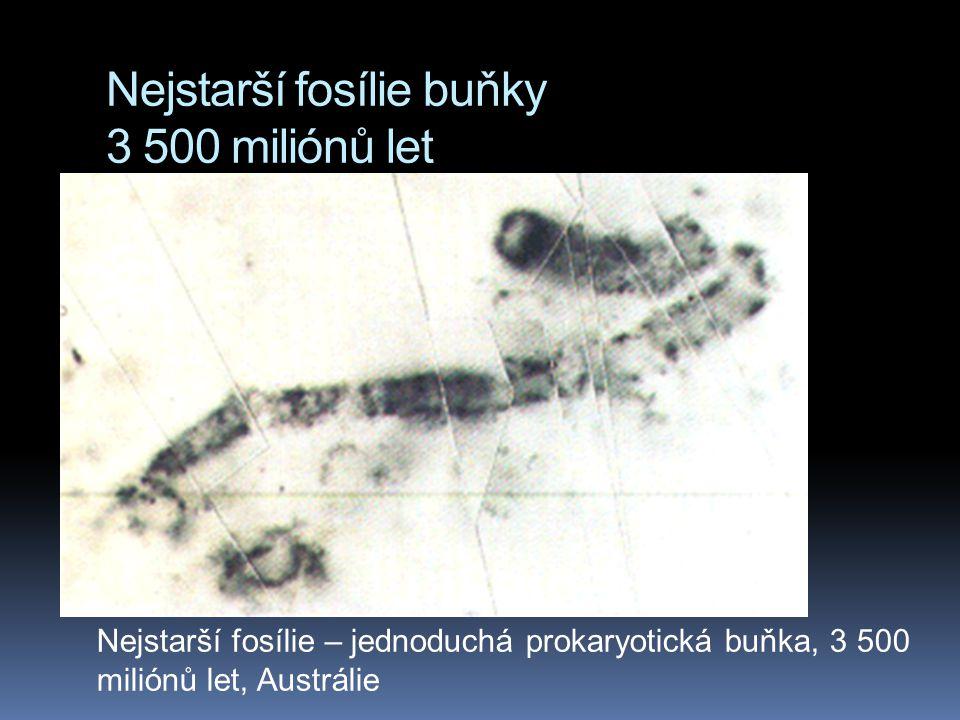 Nejstarší fosílie buňky 3 500 miliónů let Nejstarší fosílie – jednoduchá prokaryotická buňka, 3 500 miliónů let, Austrálie