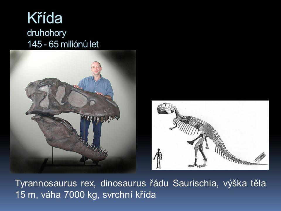 Křída druhohory 145 - 65 miliónů let Tyrannosaurus rex, dinosaurus řádu Saurischia, výška těla 15 m, váha 7000 kg, svrchní křída
