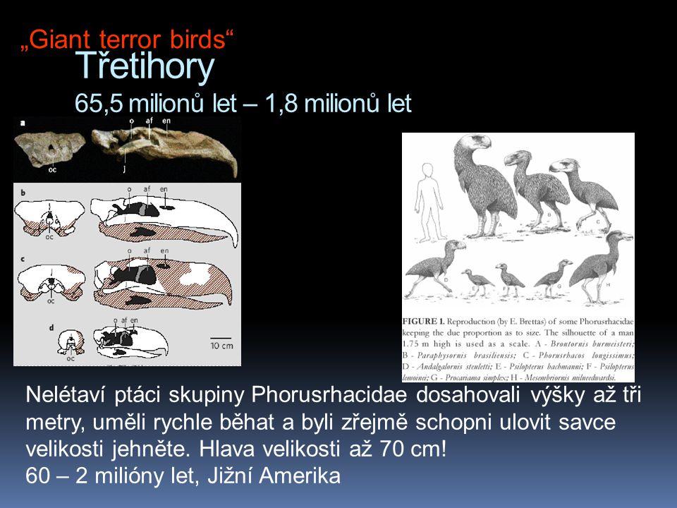 Třetihory 65,5 milionů let – 1,8 milionů let Nelétaví ptáci skupiny Phorusrhacidae dosahovali výšky až tři metry, uměli rychle běhat a byli zřejmě sch