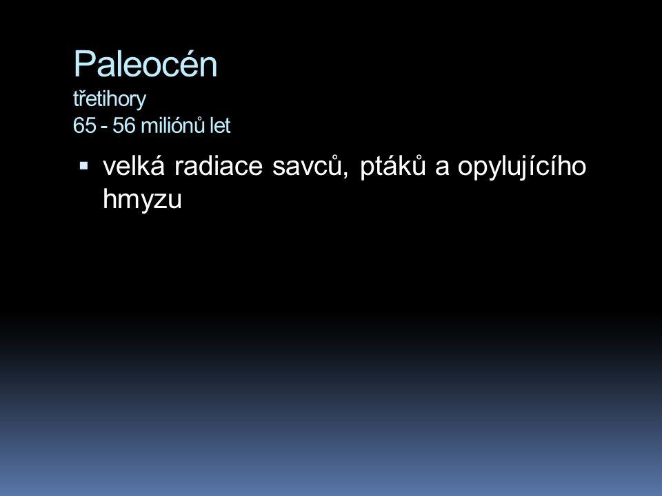 Paleocén třetihory 65 - 56 miliónů let  velká radiace savců, ptáků a opylujícího hmyzu