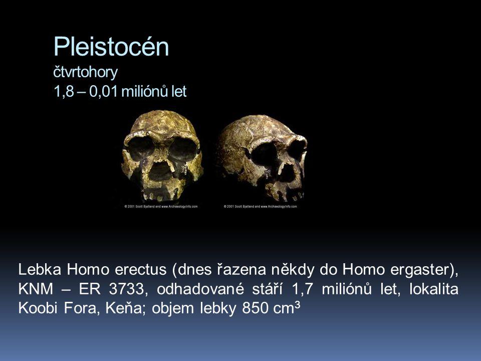 Pleistocén čtvrtohory 1,8 – 0,01 miliónů let Lebka Homo erectus (dnes řazena někdy do Homo ergaster), KNM – ER 3733, odhadované stáří 1,7 miliónů let,