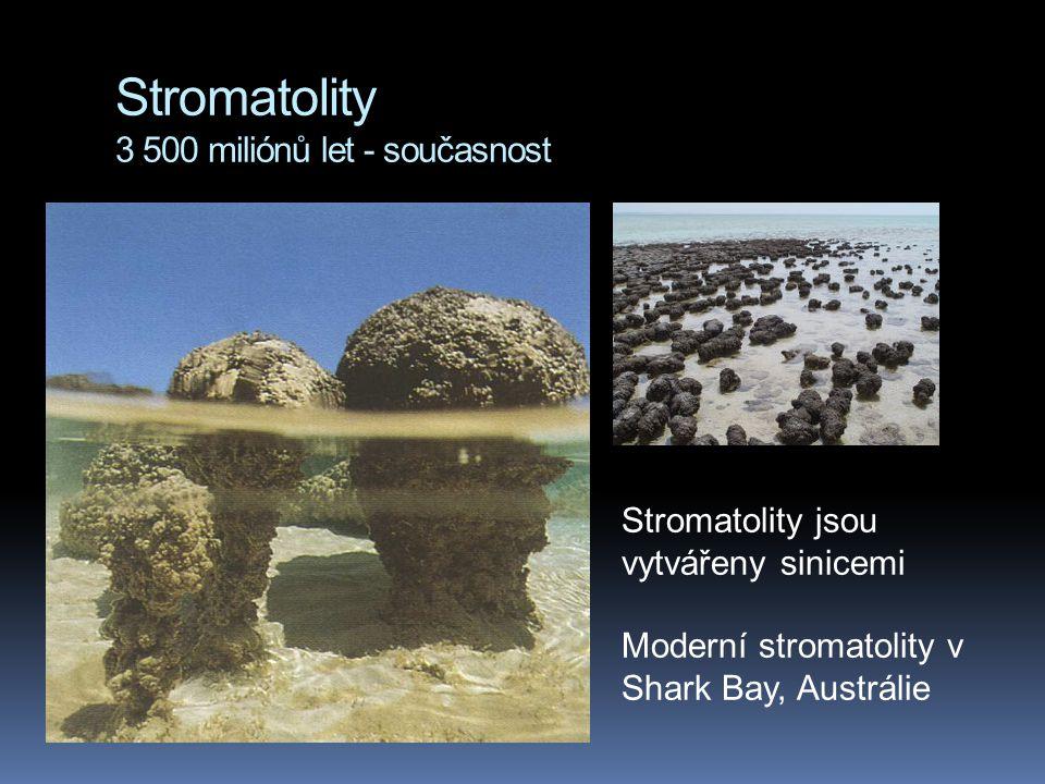 Stromatolity 3 500 miliónů let - současnost Stromatolity jsou vytvářeny sinicemi Moderní stromatolity v Shark Bay, Austrálie
