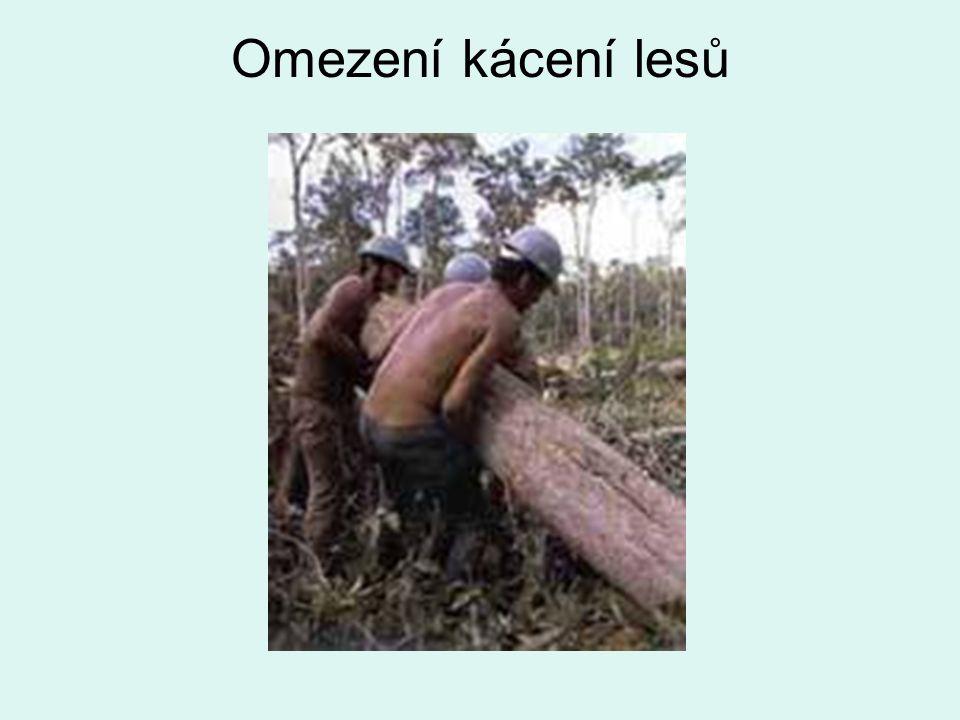 Omezení kácení lesů