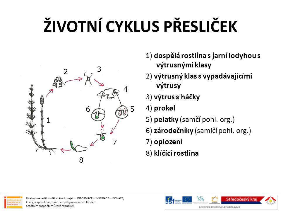 ŽIVOTNÍ CYKLUS PŘESLIČEK 1) dospělá rostlina s jarní lodyhou s výtrusnými klasy 2) výtrusný klas s vypadávajícími výtrusy 3) výtrus s háčky 4) prokel 5) pelatky (samčí pohl.