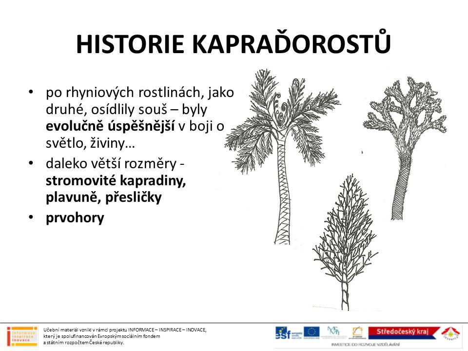 HISTORIE KAPRAĎOROSTŮ po rhyniových rostlinách, jako druhé, osídlily souš – byly evolučně úspěšnější v boji o světlo, živiny… daleko větší rozměry - stromovité kapradiny, plavuně, přesličky prvohory Učební materiál vznikl v rámci projektu INFORMACE – INSPIRACE – INOVACE, který je spolufinancován Evropským sociálním fondem a státním rozpočtem České republiky.