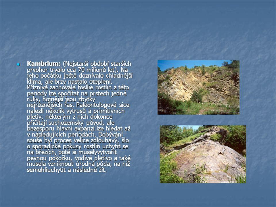 Kambrium: (Nejstarší období starších prvohor trvalo cca 70 milionů let).