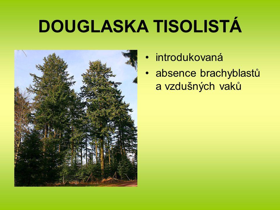 DOUGLASKA TISOLISTÁ introdukovaná absence brachyblastů a vzdušných vaků