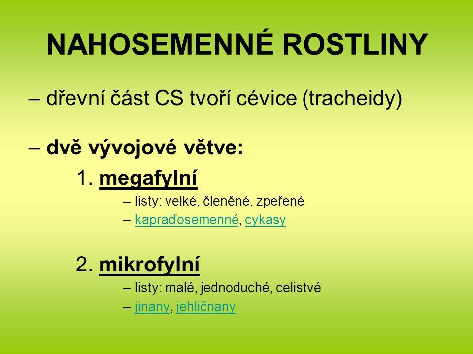 NAHOSEMENNÉ ROSTLINY –dřevní část CS tvoří cévice (tracheidy) –dvě vývojové větve: 1.