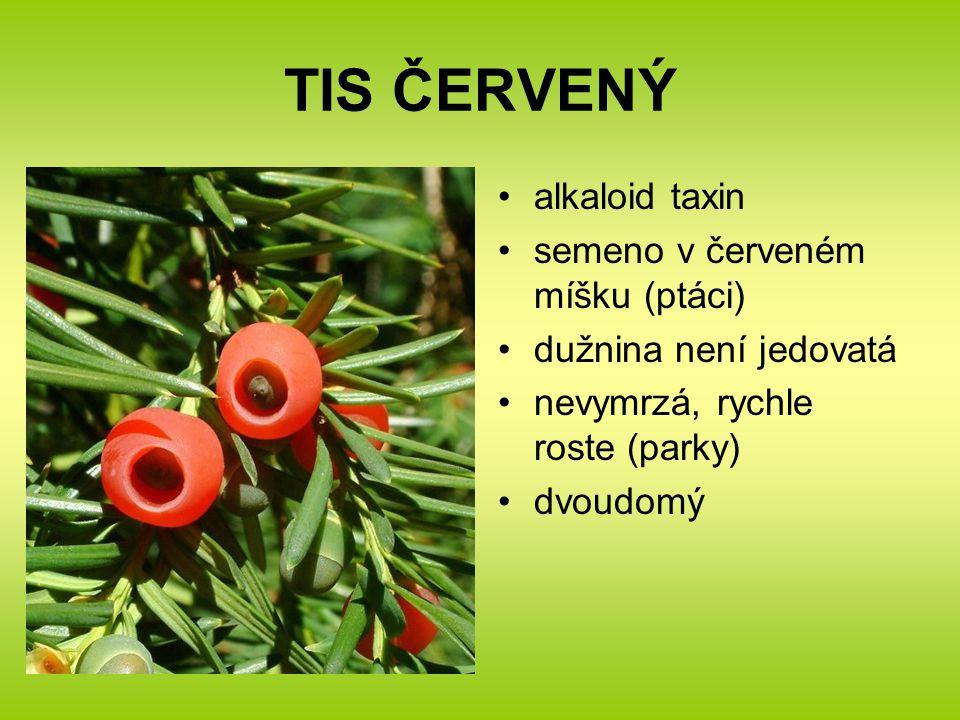 TIS ČERVENÝ alkaloid taxin semeno v červeném míšku (ptáci) dužnina není jedovatá nevymrzá, rychle roste (parky) dvoudomý