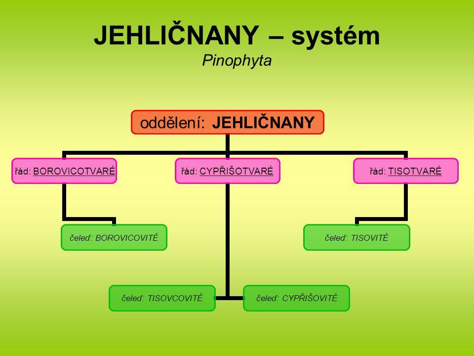 JEHLIČNANY – systém Pinophyta oddělení: JEHLIČNANY řád: BOROVICOTVARÉ čeleď: BOROVICOVITÉ řád: CYPŘIŠOTVARÉ čeleď: TISOVCOVITÉ čeleď: CYPŘIŠOVITÉ řád: TISOTVARÉ čeleď: TISOVITÉ