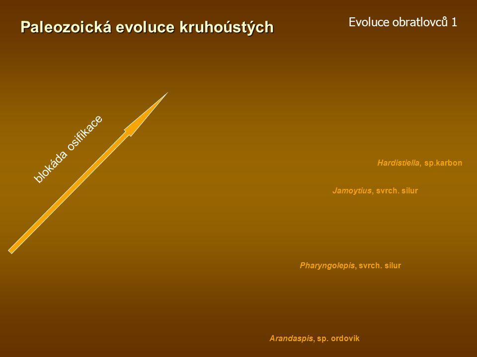 Evoluce obratlovců 1 Nejstarší obratlovci Vznik tvrdých tkání – acelulární kost
