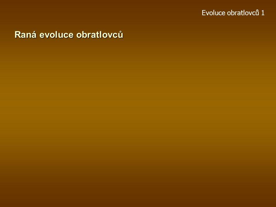 Evoluce obratlovců 1 Paleozoická evoluce kruhoústých Arandaspis, sp.