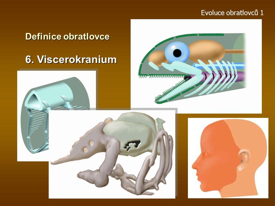 Evoluce obratlovců 1 Definice obratlovce 5. Neurální lišta