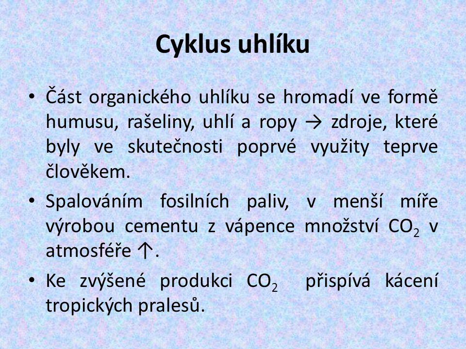 Cyklus uhlíku Část organického uhlíku se hromadí ve formě humusu, rašeliny, uhlí a ropy → zdroje, které byly ve skutečnosti poprvé využity teprve člověkem.