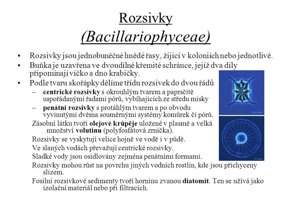 Rozsivky (Bacillariophyceae) Rozsivky jsou jednobuněčné hnědé řasy, žijící v koloniích nebo jednotlivě. Buňka je uzavřena ve dvoudílné křemité schránc