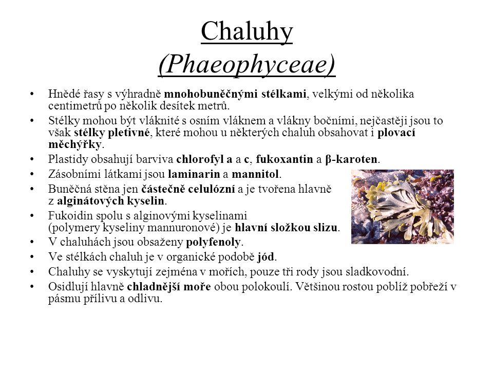 Chaluhy (Phaeophyceae) Hnědé řasy s výhradně mnohobuněčnými stélkami, velkými od několika centimetrů po několik desítek metrů. Stélky mohou být vlákni