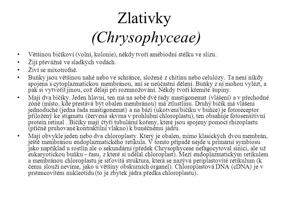Zlativky (Chrysophyceae) Většinou bičíkoví (volní, kolonie), někdy tvoří amébiodní stélku ve slizu. Žijí převážně ve sladkých vodách. Živí se mixotrof