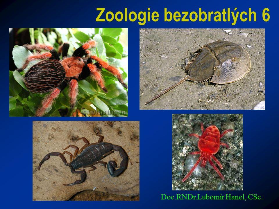 Zoologie bezobratlých 6 Doc.RNDr.Lubomír Hanel, CSc.
