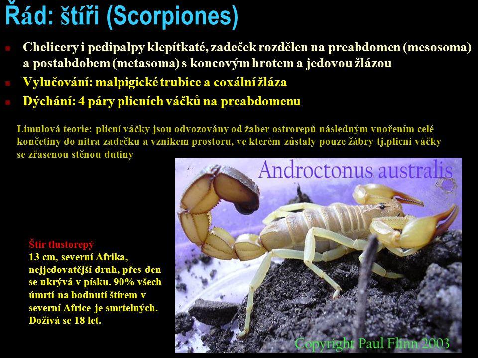 Ř á d: š t í ři (Scorpiones) Chelicery i pedipalpy klepítkaté, zadeček rozdělen na preabdomen (mesosoma) a postabdobem (metasoma) s koncovým hrotem a