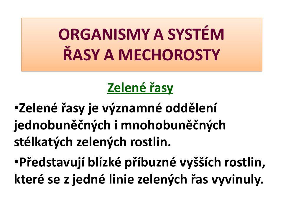 ORGANISMY A SYSTÉM ŘASY A MECHOROSTY Zelené řasy Zelené řasy je významné oddělení jednobuněčných i mnohobuněčných stélkatých zelených rostlin. Předsta