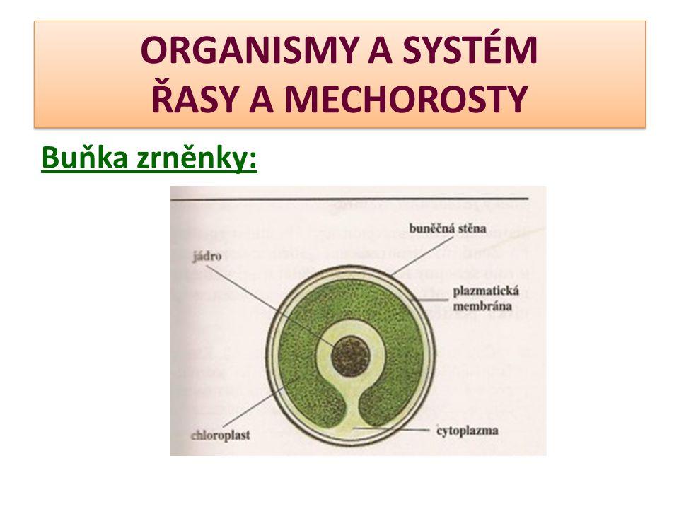 ORGANISMY A SYSTÉM ŘASY A MECHOROSTY Buňka zrněnky: