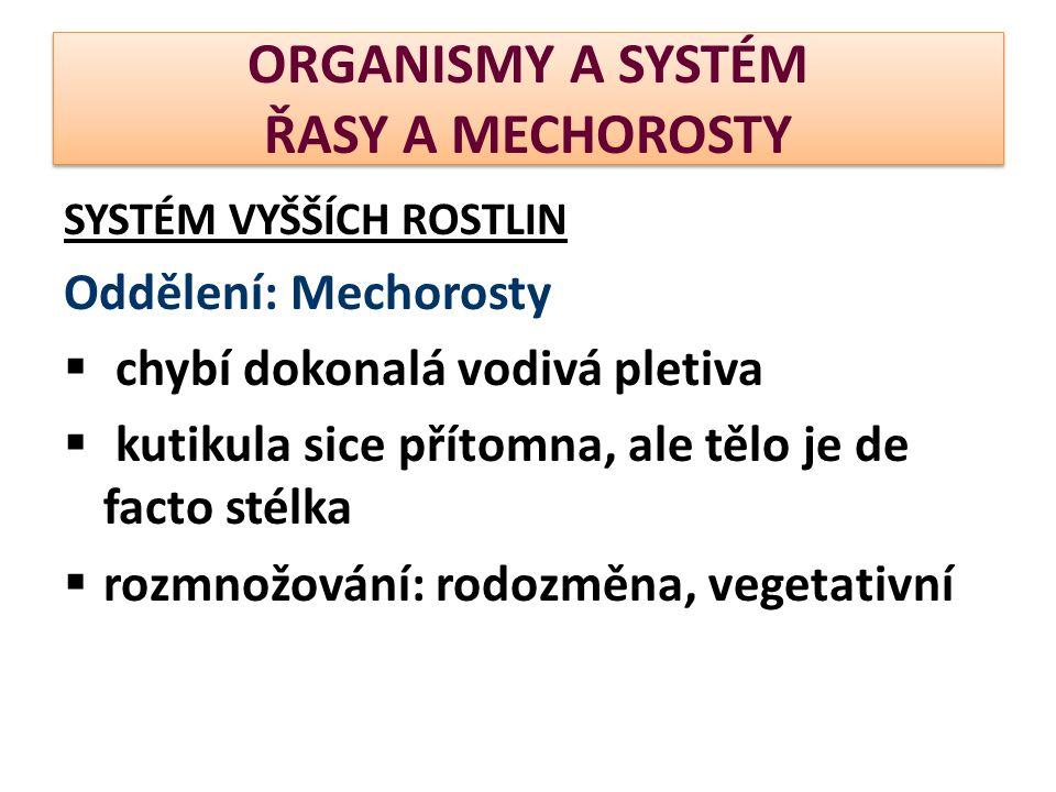 ORGANISMY A SYSTÉM ŘASY A MECHOROSTY SYSTÉM VYŠŠÍCH ROSTLIN Oddělení: Mechorosty  chybí dokonalá vodivá pletiva  kutikula sice přítomna, ale tělo je de facto stélka  rozmnožování: rodozměna, vegetativní