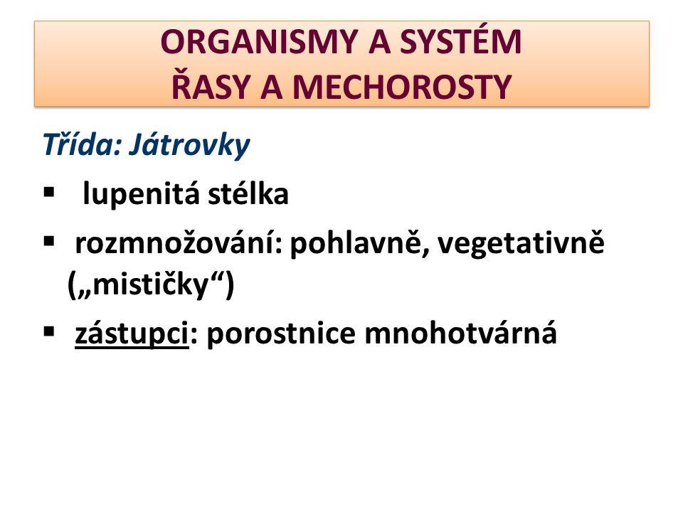 """ORGANISMY A SYSTÉM ŘASY A MECHOROSTY Třída: Játrovky  lupenitá stélka  rozmnožování: pohlavně, vegetativně (""""mističky )  zástupci: porostnice mnohotvárná"""