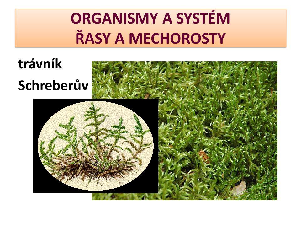 ORGANISMY A SYSTÉM ŘASY A MECHOROSTY trávník Schreberův