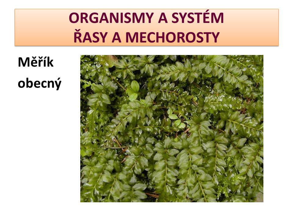 ORGANISMY A SYSTÉM ŘASY A MECHOROSTY Měřík obecný