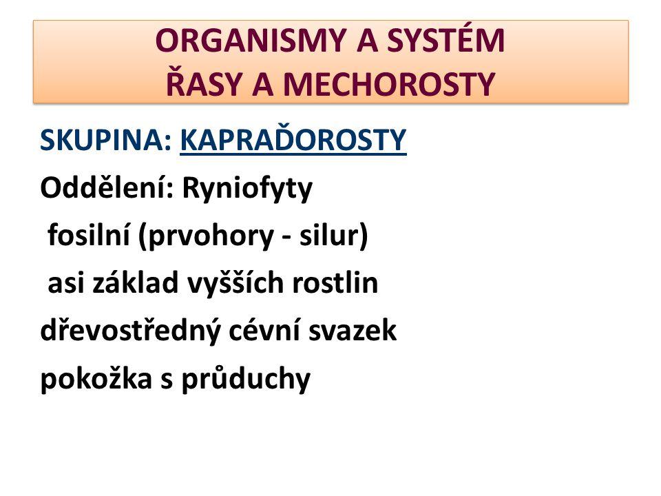 ORGANISMY A SYSTÉM ŘASY A MECHOROSTY SKUPINA: KAPRAĎOROSTY Oddělení: Ryniofyty fosilní (prvohory - silur) asi základ vyšších rostlin dřevostředný cévn