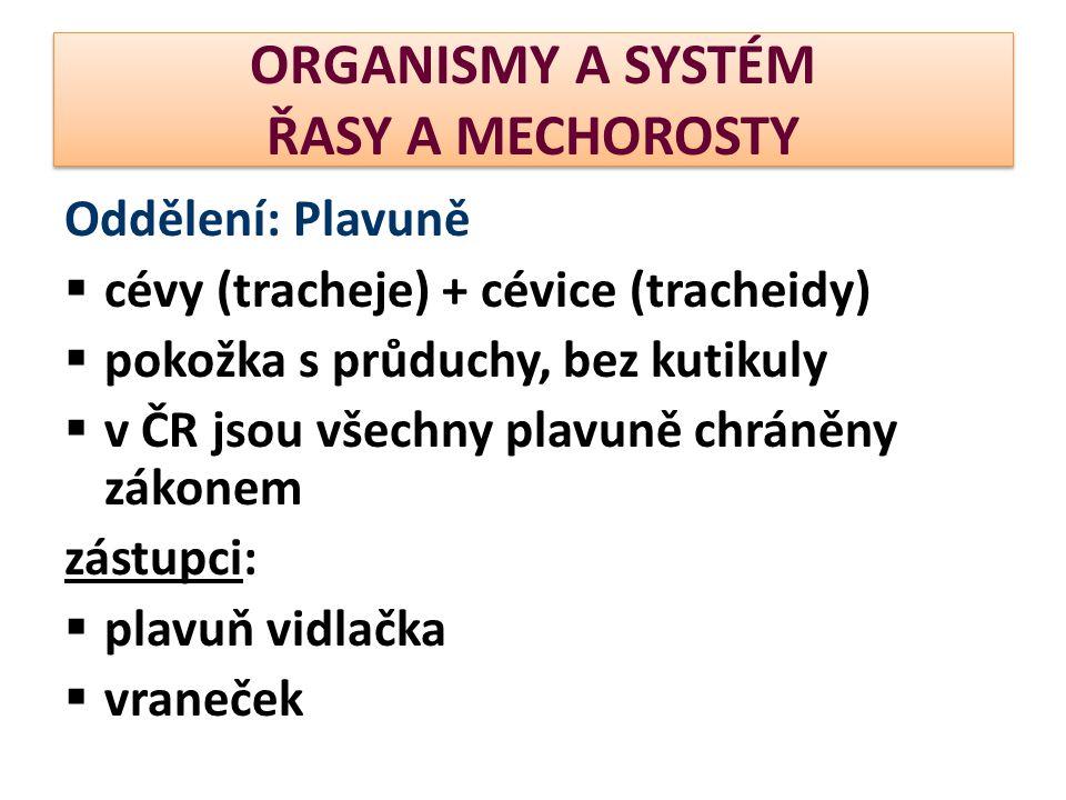 ORGANISMY A SYSTÉM ŘASY A MECHOROSTY Oddělení: Plavuně  cévy (tracheje) + cévice (tracheidy)  pokožka s průduchy, bez kutikuly  v ČR jsou všechny p