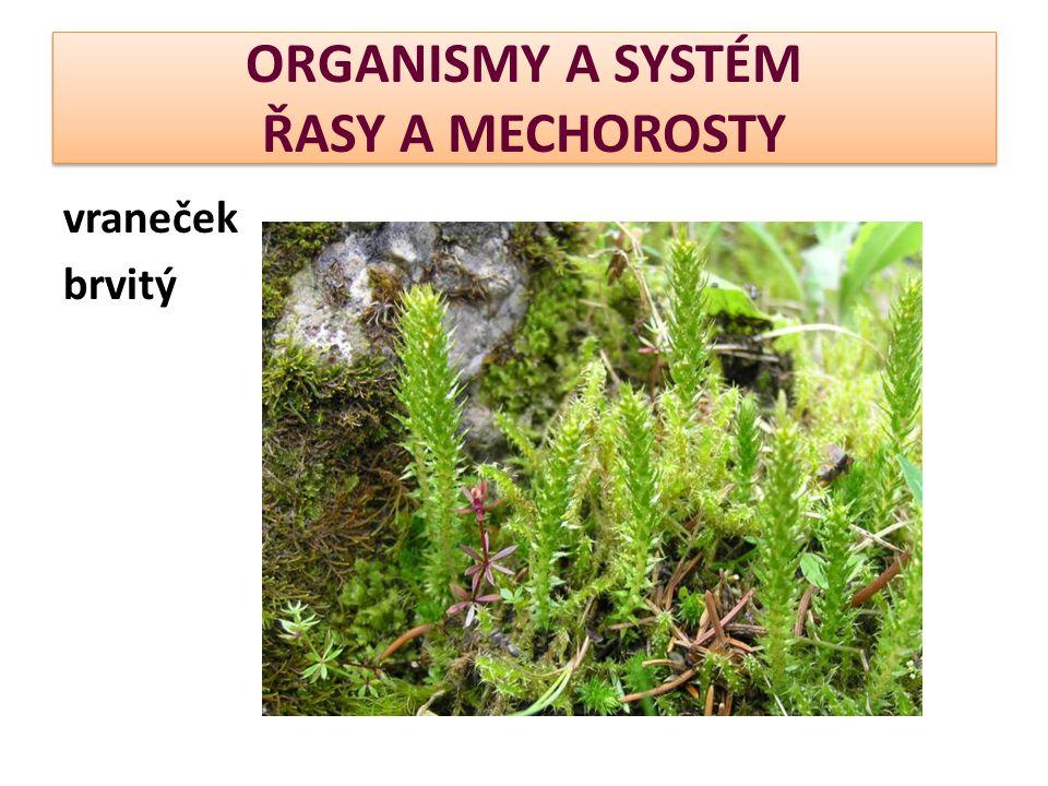 ORGANISMY A SYSTÉM ŘASY A MECHOROSTY vraneček brvitý