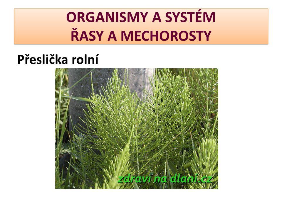 ORGANISMY A SYSTÉM ŘASY A MECHOROSTY Přeslička rolní