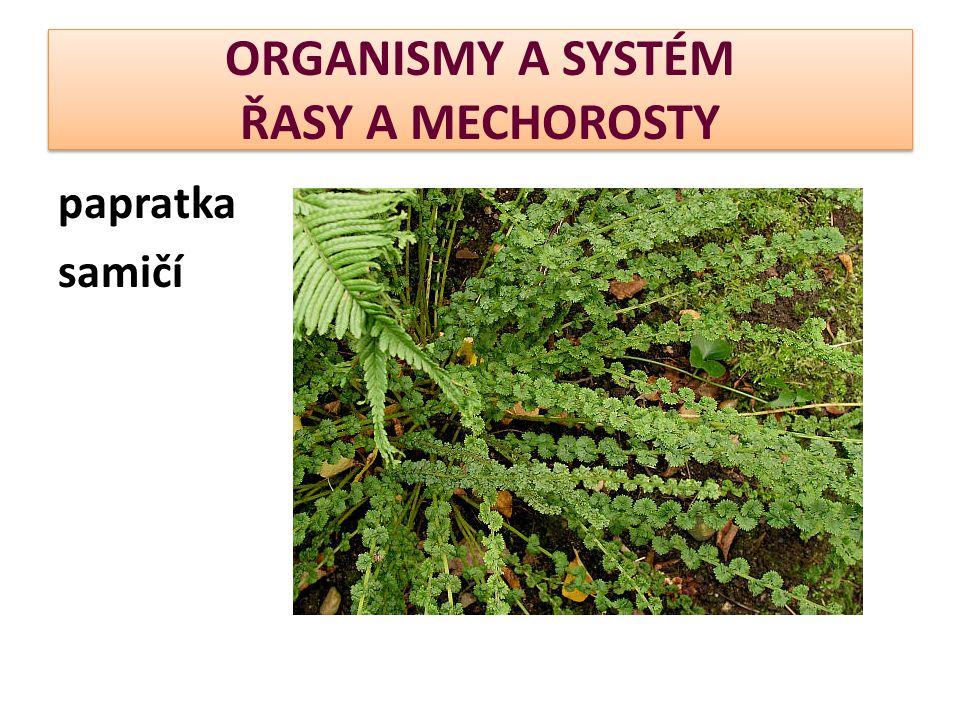 ORGANISMY A SYSTÉM ŘASY A MECHOROSTY papratka samičí